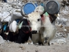 everest-summit-expedition-7